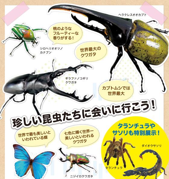 珍しい昆虫たちに会いに行こう!